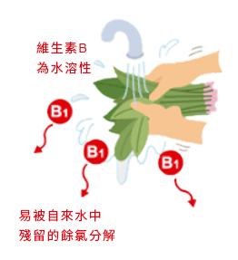 維生素B為水溶性易被自來水中殘留的餘氯分解